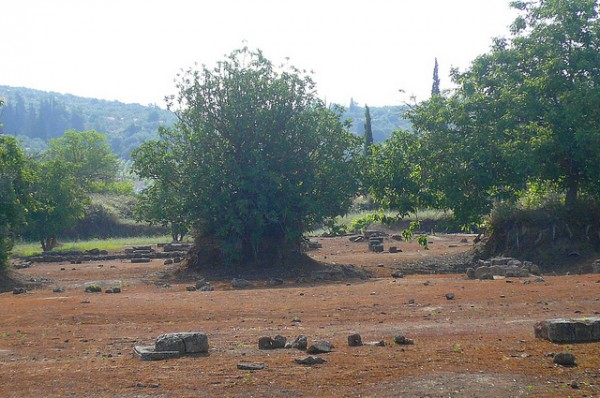 Trees on the archeological site of Nemea